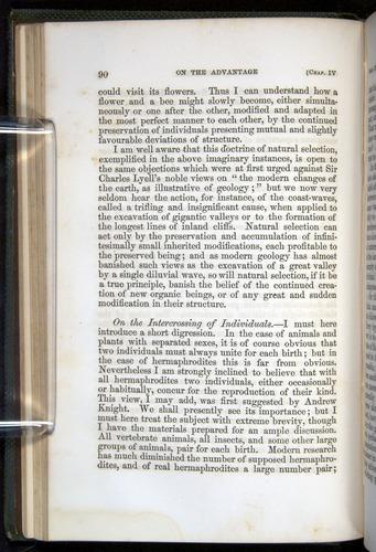 Image of Darwin-F377-1860-00090