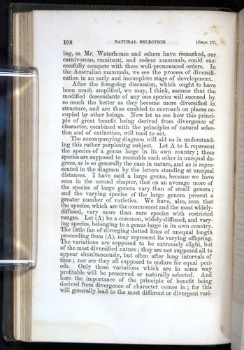 Image of Darwin-F377-1860-00108