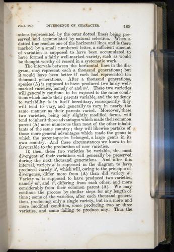 Image of Darwin-F377-1860-00109