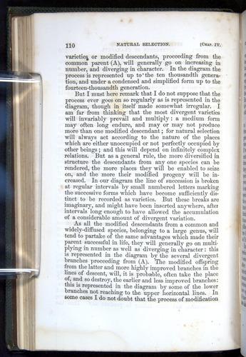 Image of Darwin-F377-1860-00110