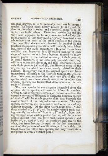 Image of Darwin-F377-1860-00113