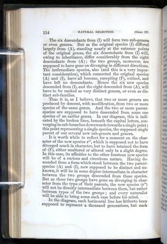 Image of Darwin-F377-1860-00114