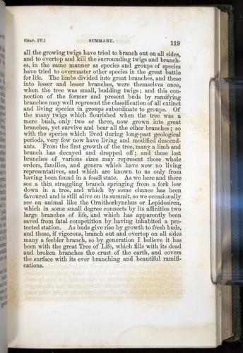 Image of Darwin-F377-1860-00119