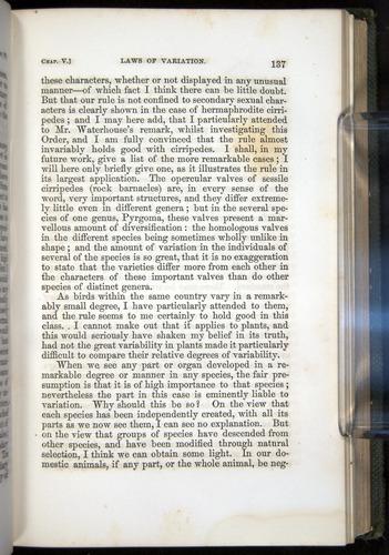 Image of Darwin-F377-1860-00137