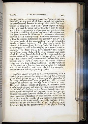 Image of Darwin-F377-1860-00143