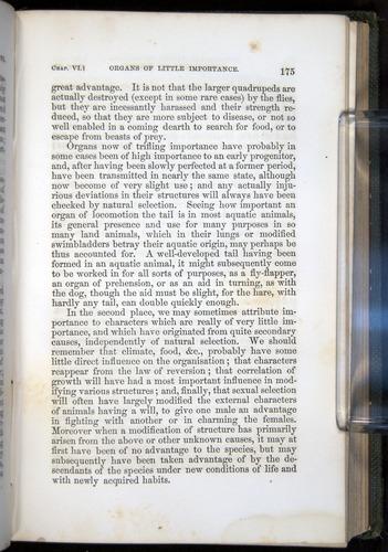 Image of Darwin-F377-1860-00175
