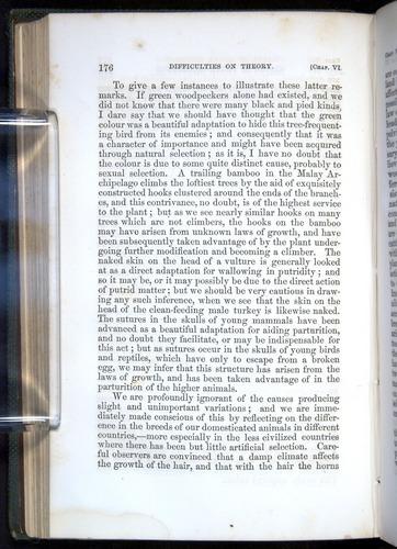 Image of Darwin-F377-1860-00176