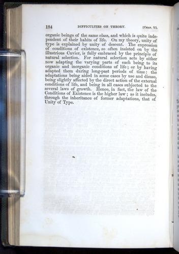 Image of Darwin-F377-1860-00184