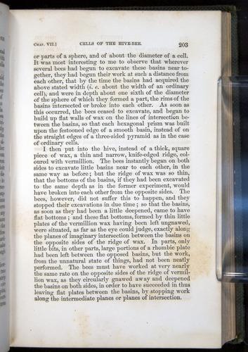 Image of Darwin-F377-1860-00203