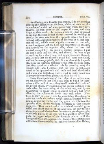 Image of Darwin-F377-1860-00204