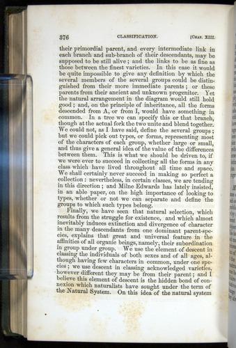 Image of Darwin-F377-1860-00376