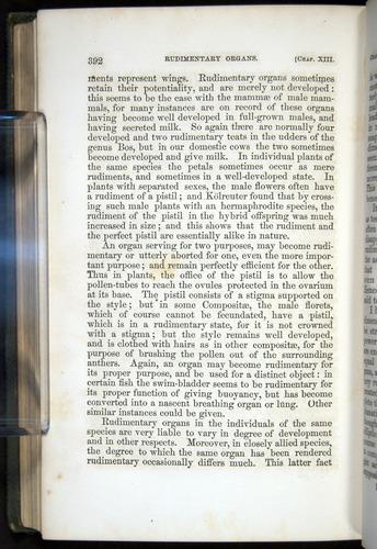 Image of Darwin-F377-1860-00392