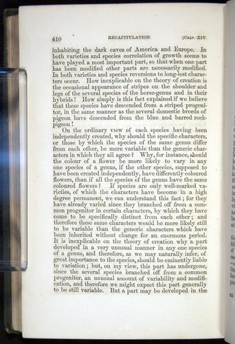 Image of Darwin-F377-1860-00410