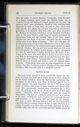 Image of Darwin-F401-1876-036