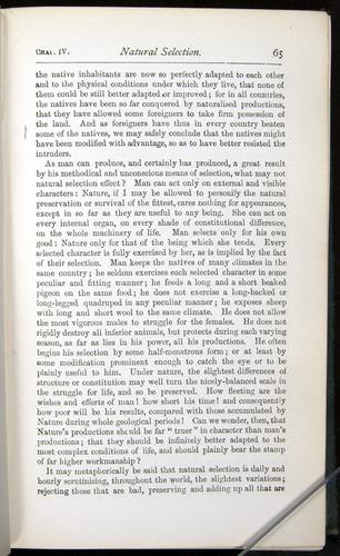 Image of Darwin-F401-1876-065