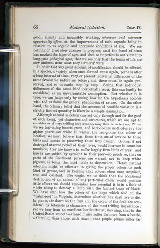 Image of Darwin-F401-1876-066