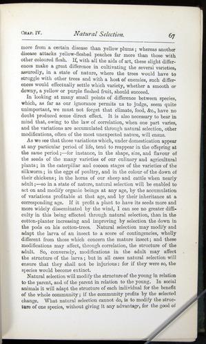 Image of Darwin-F401-1876-067