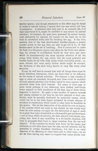 Image of Darwin-F401-1876-068