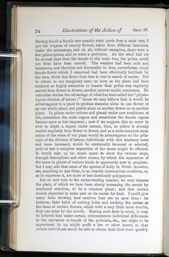 Image of Darwin-F401-1876-074