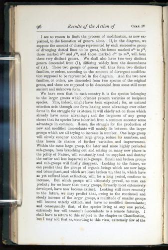 Image of Darwin-F401-1876-096