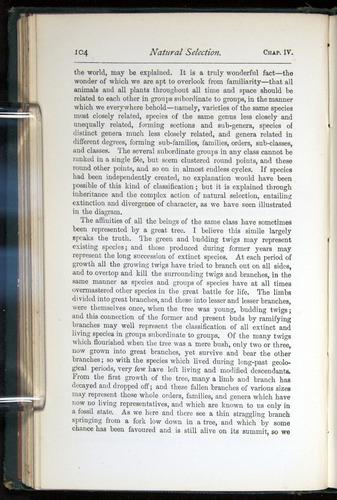 Image of Darwin-F401-1876-104