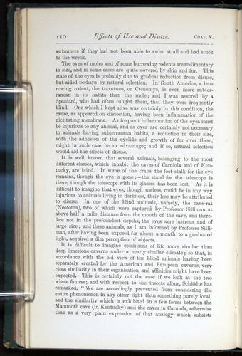 Image of Darwin-F401-1876-110
