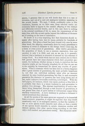 Image of Darwin-F401-1876-126