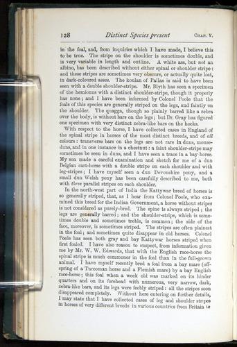 Image of Darwin-F401-1876-128