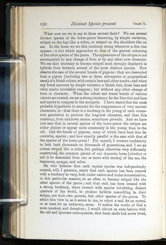 Image of Darwin-F401-1876-130