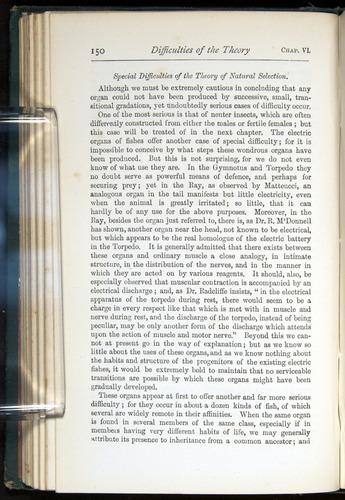Image of Darwin-F401-1876-150