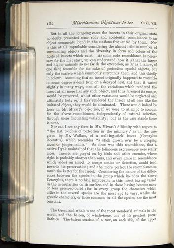 Image of Darwin-F401-1876-182