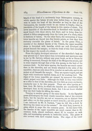 Image of Darwin-F401-1876-184