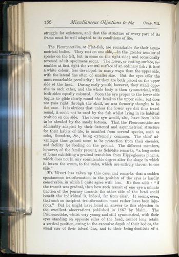 Image of Darwin-F401-1876-186