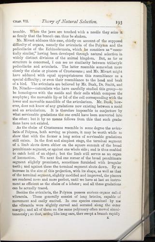 Image of Darwin-F401-1876-193