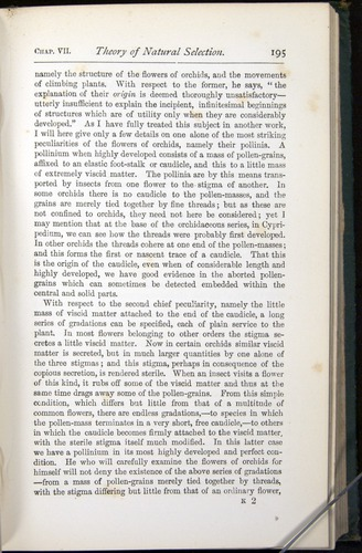 Image of Darwin-F401-1876-195