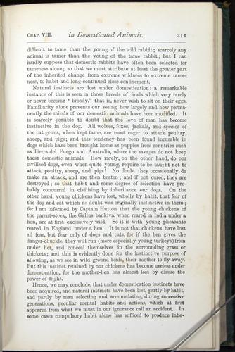 Image of Darwin-F401-1876-211