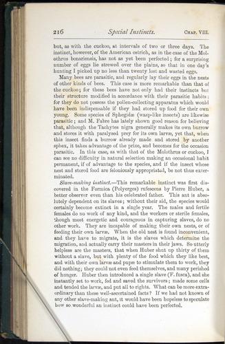 Image of Darwin-F401-1876-216