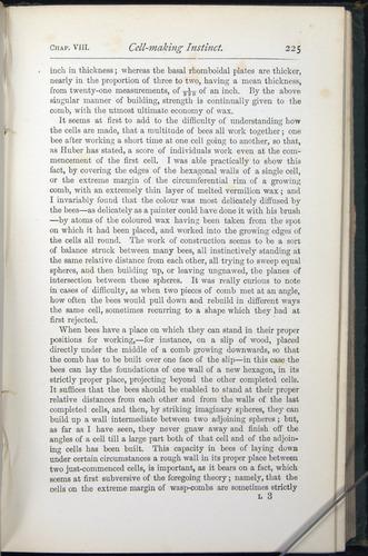 Image of Darwin-F401-1876-225