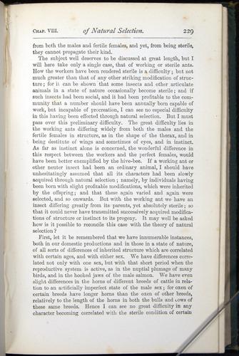 Image of Darwin-F401-1876-229