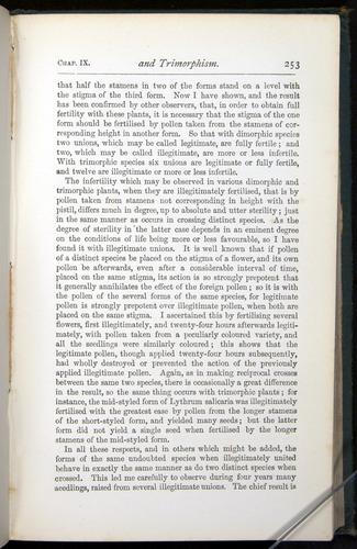 Image of Darwin-F401-1876-253