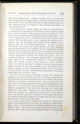 Image of Darwin-F401-1876-265