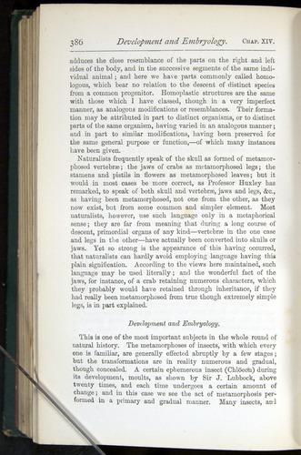 Image of Darwin-F401-1876-386