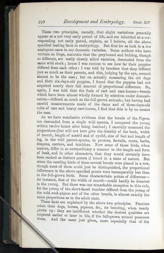 Image of Darwin-F401-1876-392