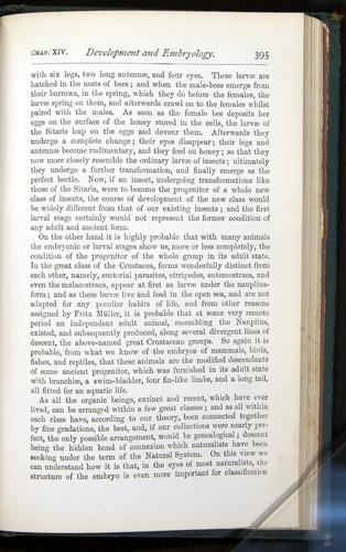 Image of Darwin-F401-1876-395