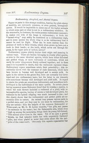 Image of Darwin-F401-1876-397