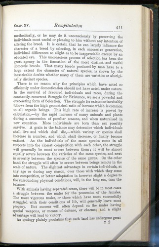 Image of Darwin-F401-1876-411