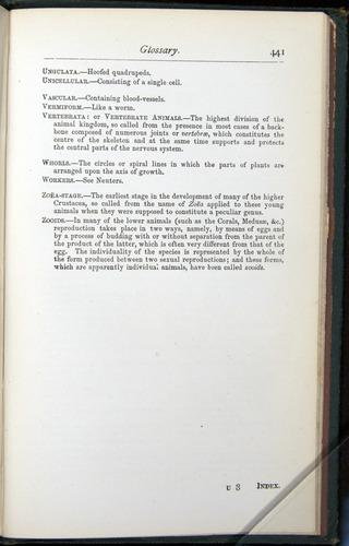 Image of Darwin-F401-1876-441