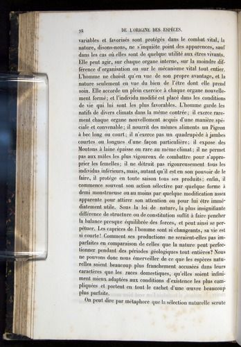 Image of Darwin-F656-1866-00098