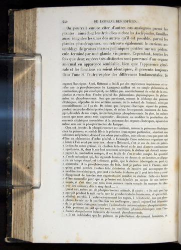 Image of Darwin-F656-1866-00240
