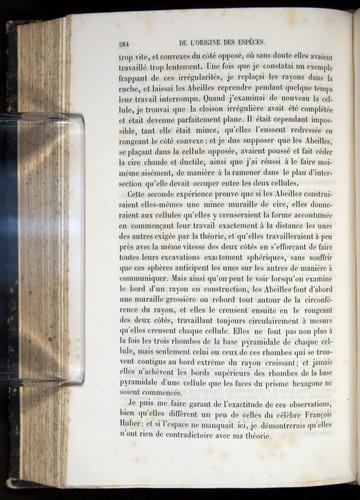 Image of Darwin-F656-1866-00284